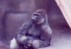 The-Thinker-San-Diego-Zoo