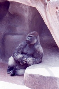 The Thinker, San Diego Zoo