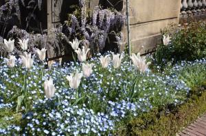 Filoli-Spring-2100_IMG_0585