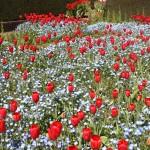 Filoli-Spring-2100_IMG_0588