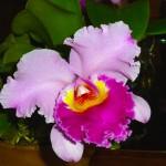Filoli-Spring-2013-15-03_009_A_res90