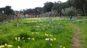 Filoli-Spring-2013-15-03_049_B