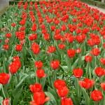 Filoli-Spring-2013-15-03_055_A